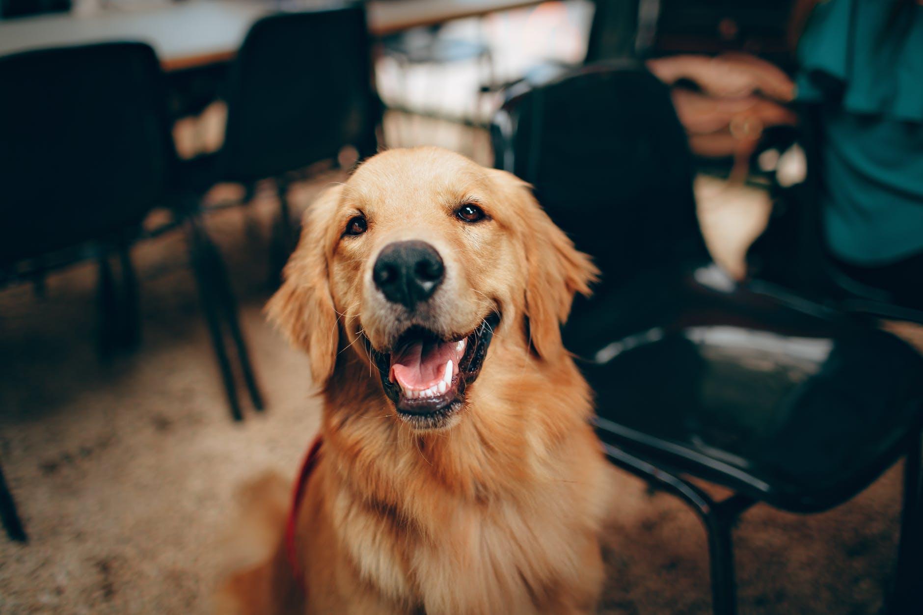 construire un mobilier pour chiens